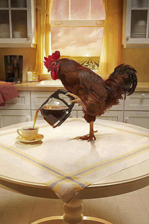 Chicken Coffee